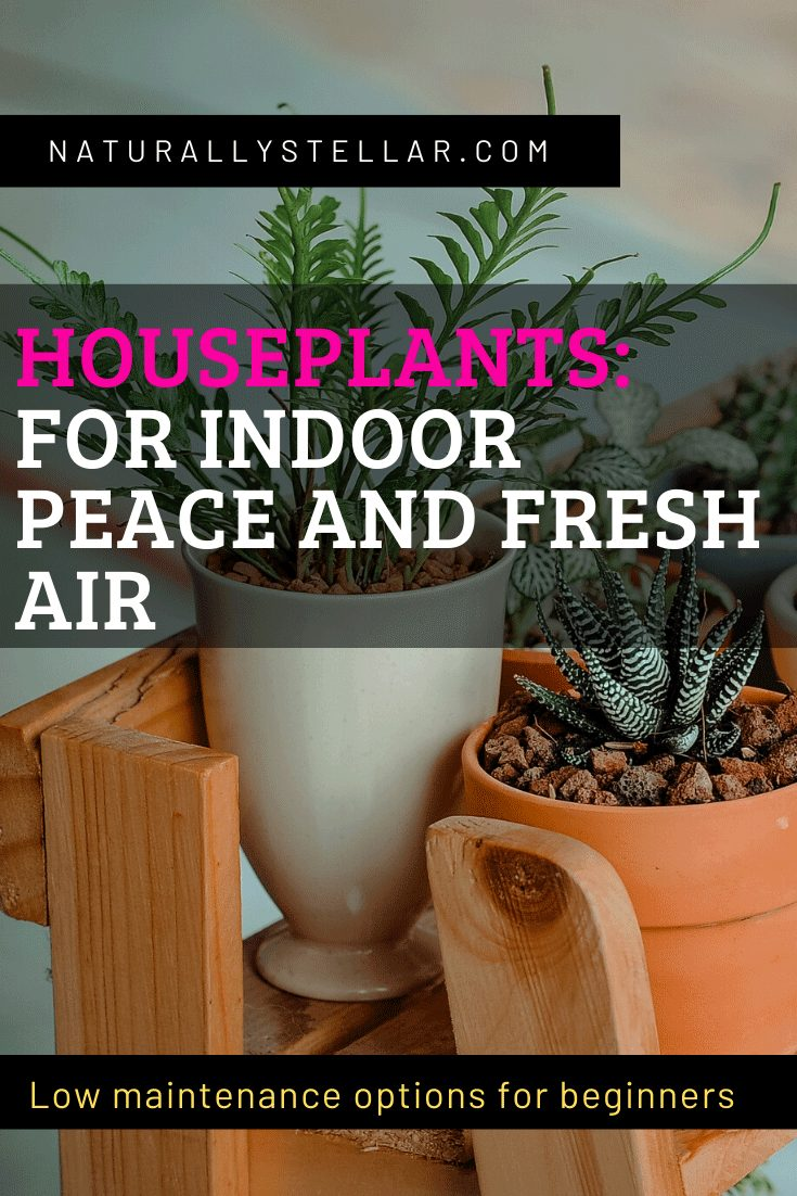Houseplants for indoor peace and fresh air