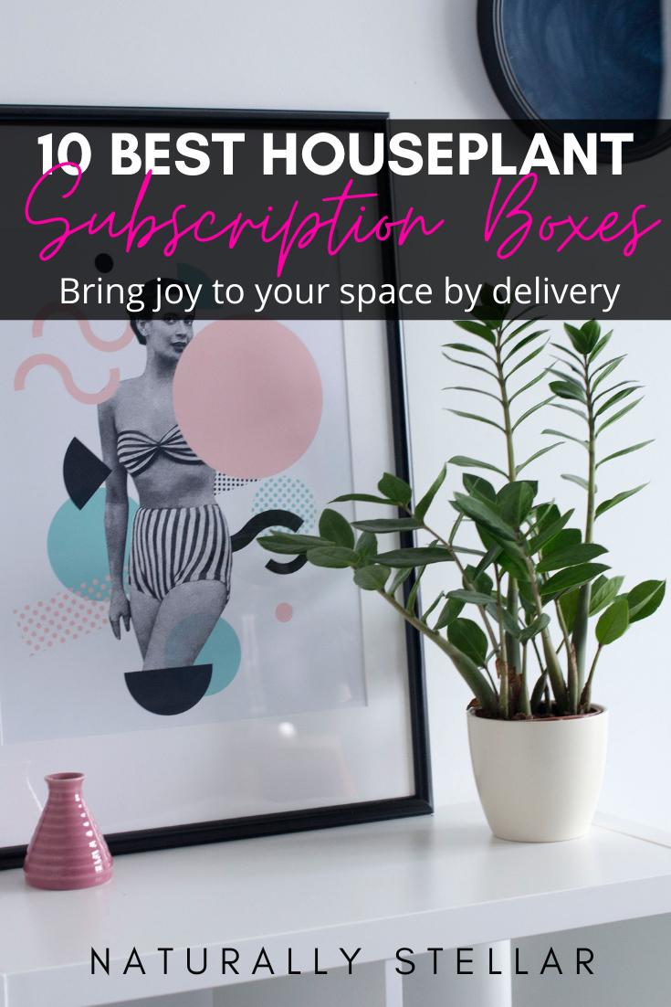 10 Best Succulent Subscriptions To Help You Plant Joy