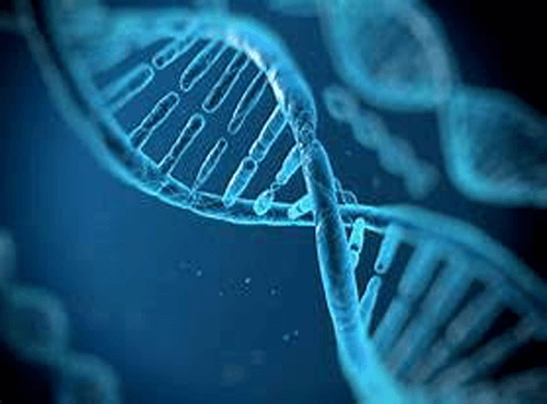 Genetic Testing - Natural Medicine Group