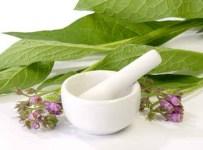plantas medicinales para la circulacion sanguínea