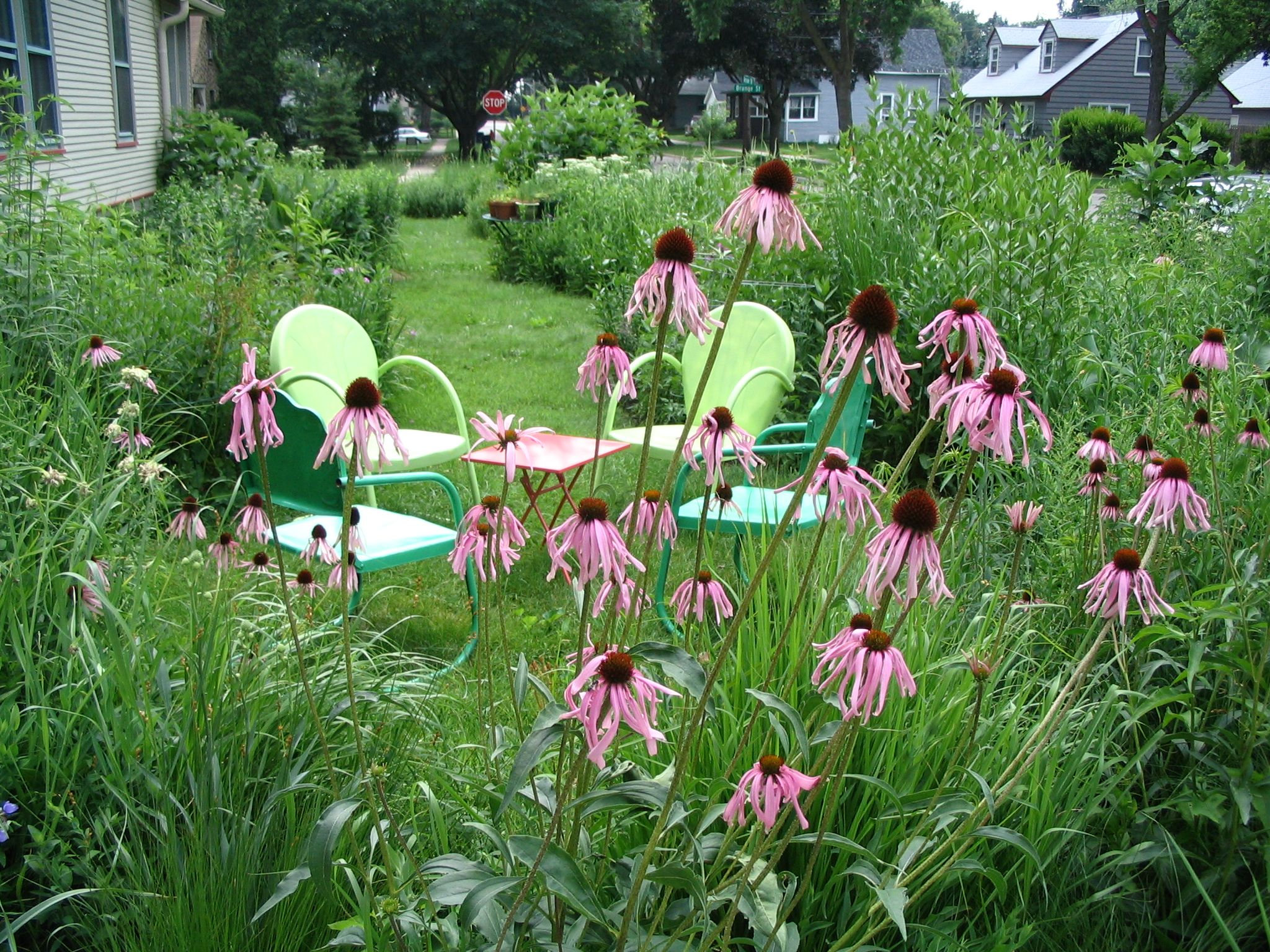 Sweet april showers do bring may flowers pat hills natural a lovely sitting area end of june pale purple coneflower echinacea pallida full sun mightylinksfo