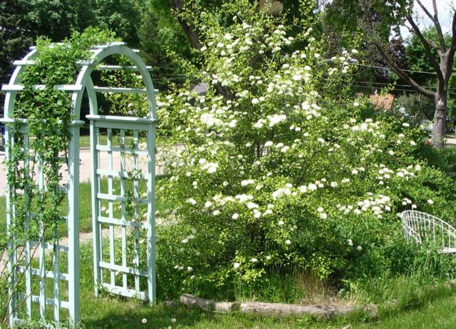 black haw and arch