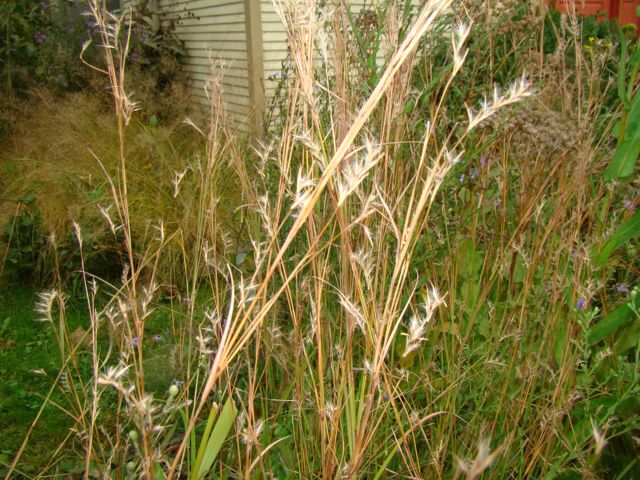 little bluestem fall 2014