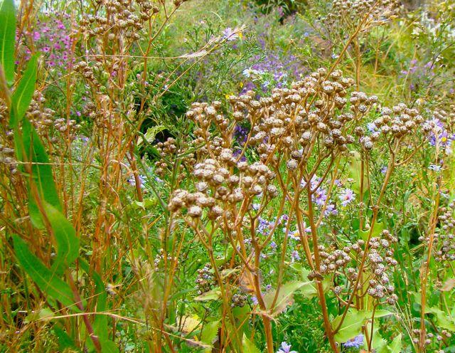 wild quinine fall 2014