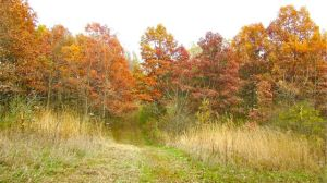 fall foliage white oak BFP