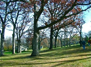 oak savanna bad example