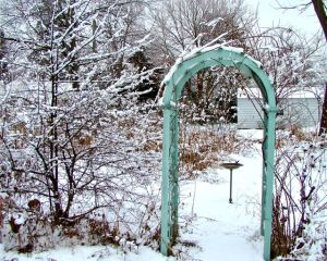 Black Haw & Trellis Winter