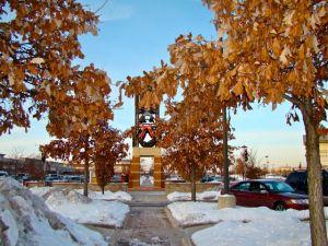 Chinquepin Oak parking lot