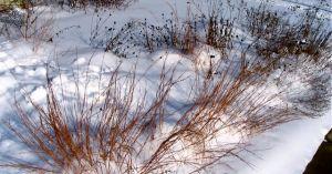 Little Blue Grass winter