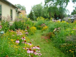 side yard August