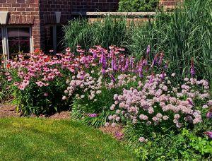 Tami's garden