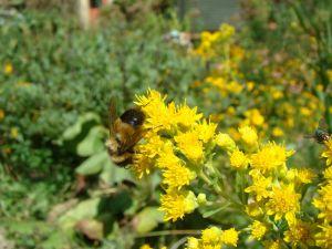 bee on stiff GR