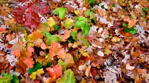 fall groundcover