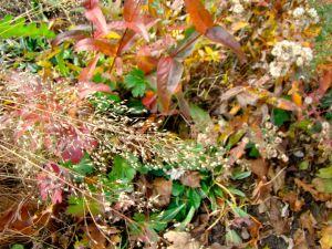 under oak pds plume, nov