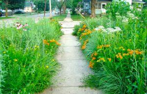front sidewalk June