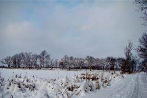 frozen-pond-bfp