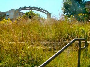 grass-fall-river-park-geneva