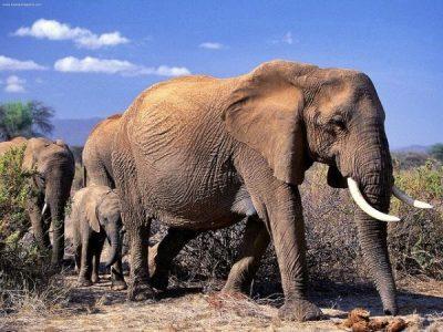 słonie, gotu kola, wąkrota azjatycka - właściwości