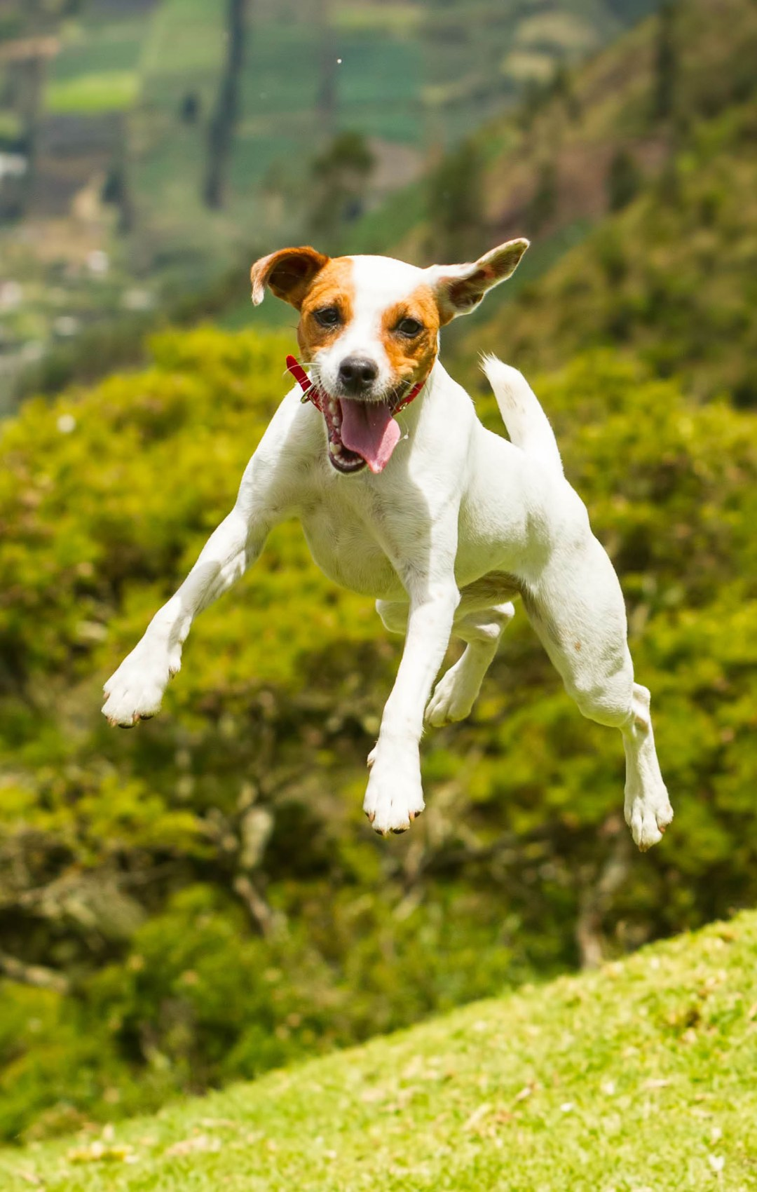Dog allergies -- The Drugs your pet needs