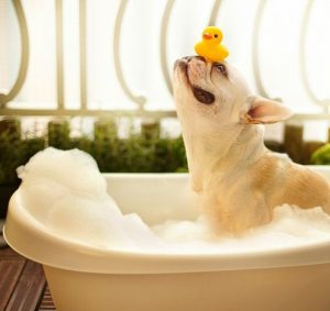 dog-in-bathtub