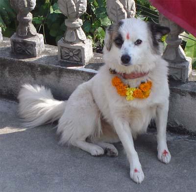 Dog_worship_in_Hinduism