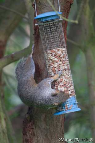 squirrel-feeder4