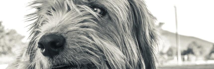 Tierhaarallergie mit Naturheilkunde behandeln