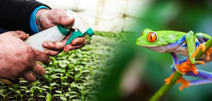 pesticides amphibians