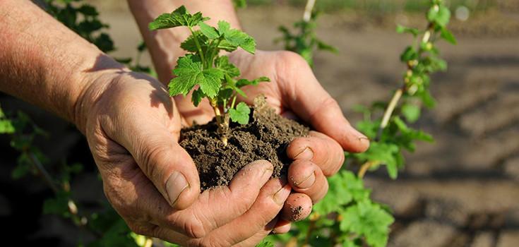 farming-dirt-soil-735-350