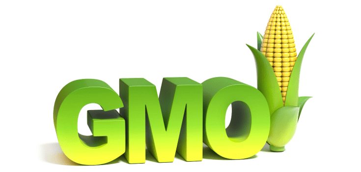 Image result for gmo