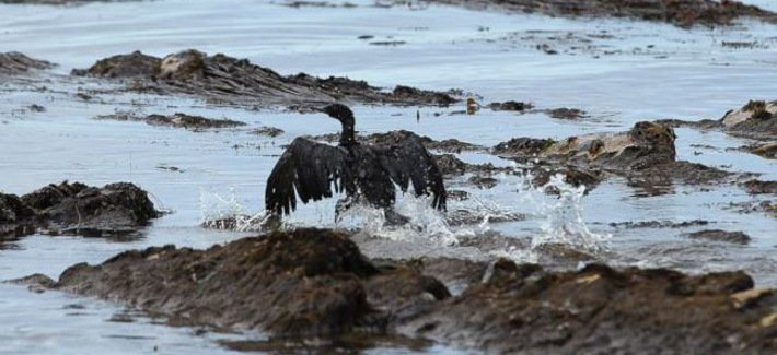 Shocking Photos: California's 105,000 Gallon Oil Spill Hits Pacific Ocean Oil-spill-2015_710_320