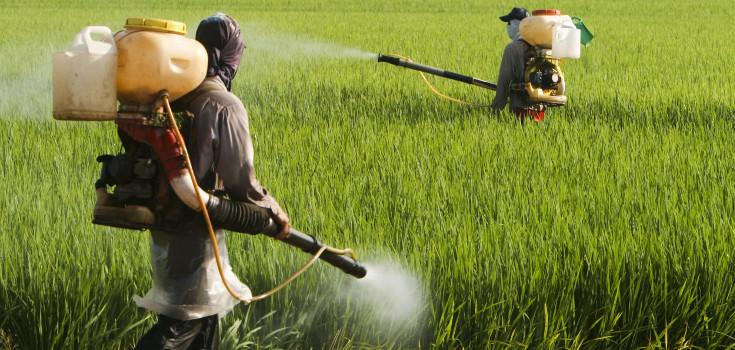 pesticides_field_guys_735_350