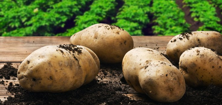 potatoes_foods_735_350_2