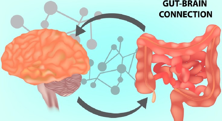 Does the brain control the gut?