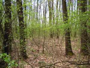 wood-lot3