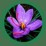 Сила Кумкумади - комплекс для омоложения