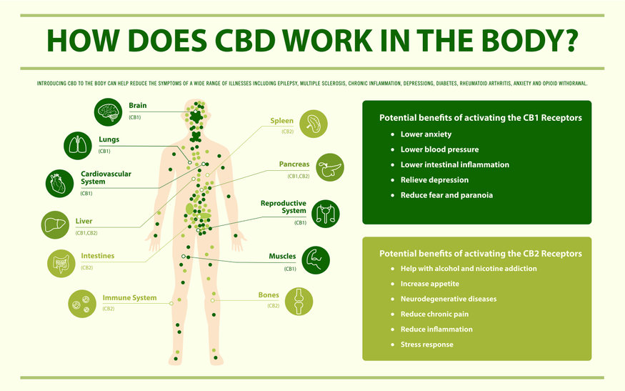 How CBD Oil Can Help Your Immune System