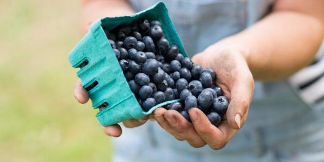 Why Should You Eat Blueberries
