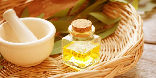 Top 7 Eucalyptus Oil Benefits and Uses_Essential Oils