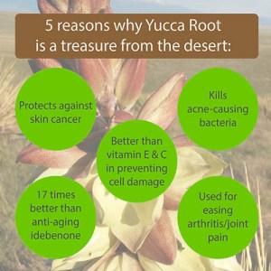 yucca root, resveratrol, cancer, antioxidant, vitamin e, joint relief, treasure,