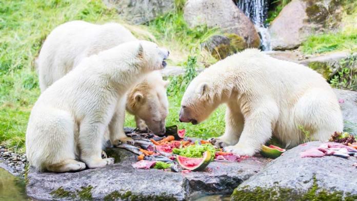 Hellabrunn Zoológico de Munique foto