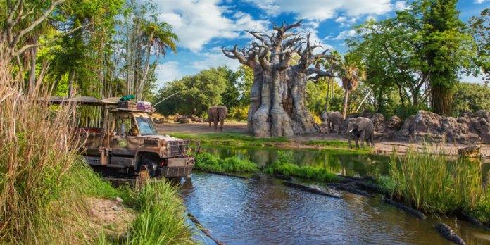 Pontos turísticos da Flórida - Disney's Animal Kingdom foto