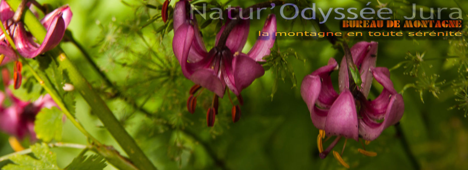 Natur'Odyssée Jura fleur