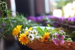 Cueillette de fleurs d'Été