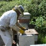 Découvrir l'apiculture