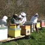 Visite de printemps au rucher