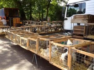 Le marché aux volailles à Charleroi