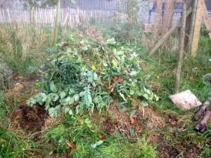 Déchets de tailles et herbes indésirables