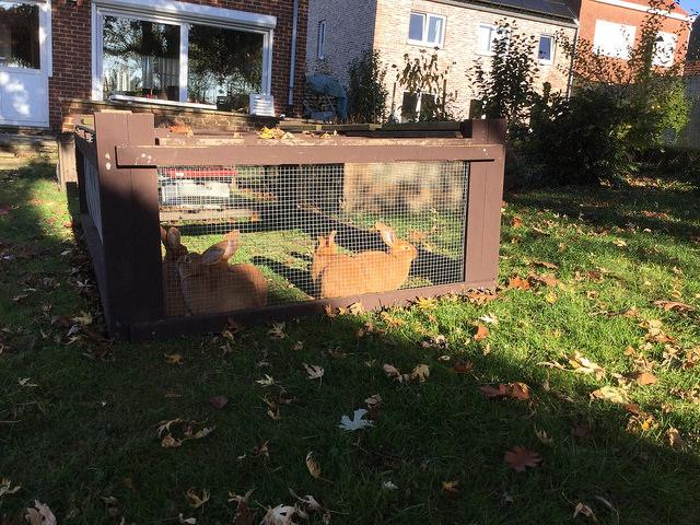 Les lapins dans la pelouse en octobre
