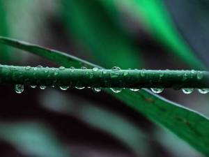 A plant stem with water drops on it